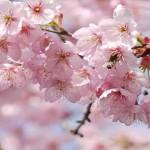 会社の花見で盛り上がるオススメの余興とやってはNGなもの!