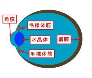 mesikumi5 3 遠くがぼやけて見えにくい症状は近視!原因と2つの種類とは!
